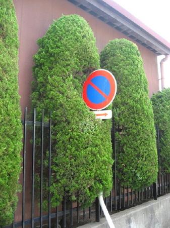 植木3_1.jpg